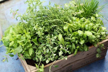Bylinky a potraviny pro podrážděný žaludek