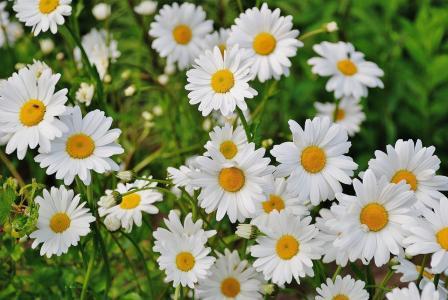 8 jarních bylinek, které se sklízejí v březnu