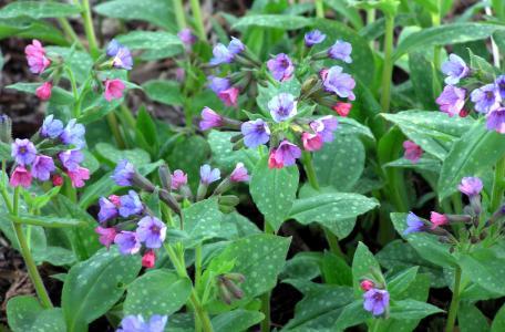 3 léčivé jarní byliny, které by neměly chybět v žádné domácnosti