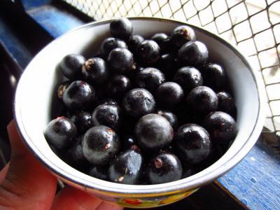 Acai bobule – superpotravina, kterou byste měli zahrnout do svého jídelníčku