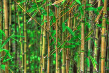 Bambusový čaj - pro duševní pohodu i potenci