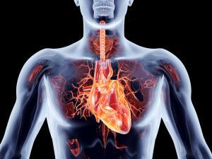Zvýšený cholesterol v krvi není třeba podceňovat