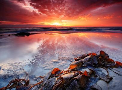 Mořské řasy - pomocník na všechno