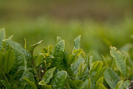 10 čajů na hubnutí a snížení chuti k jídlu