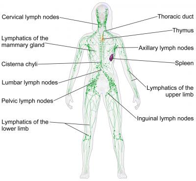 20 příznaků ucpaného lymfatického systému a 10 tipů, jak to napravit