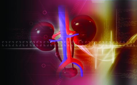 10 příznaků onemocnění ledvin, které není radno podceňovat
