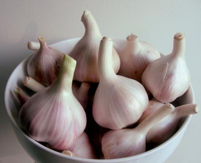 Česnek a jeho léčivé účinky
